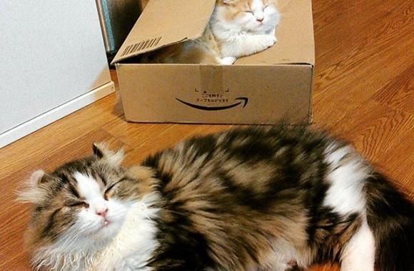 Amazon箱なベストマッチの箱入りムスメ