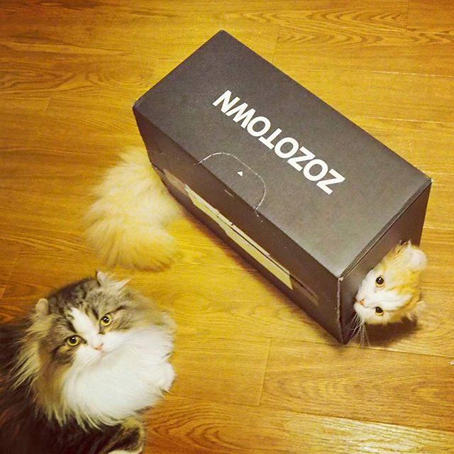 #cat #ネコ #catstagram #catsofinstagram #instacat #ilovecat #meow #はちわれ #zozotown #zozo #2016ss #style