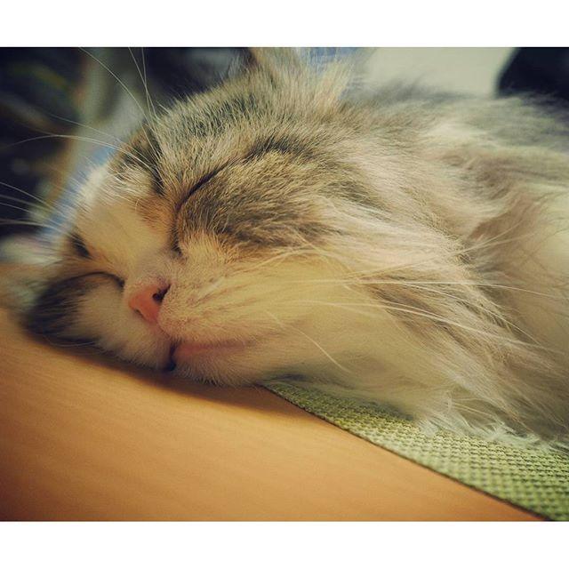 zzz.. #cat#catstagram#sleep