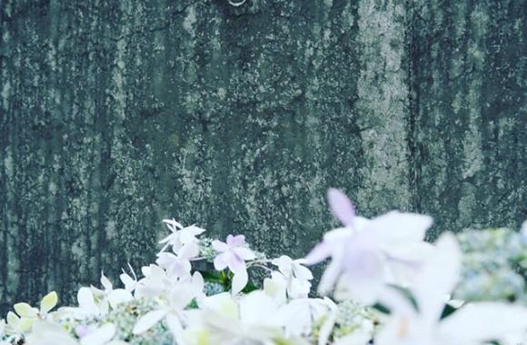 #rain #rainyday #water #umbrella #nature #instaweather #雨 #architecture #concrete #wall #grey #flower #flowers #flowerstagram #instagood #air01 #olympus