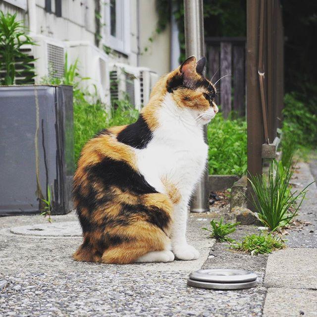連休の倉庫入り口に番猫。#cat #catsofinstagram #cats #instacat #meow #catlover #catsagram