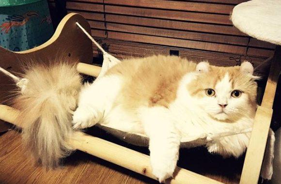 ハンモックだいすき猫