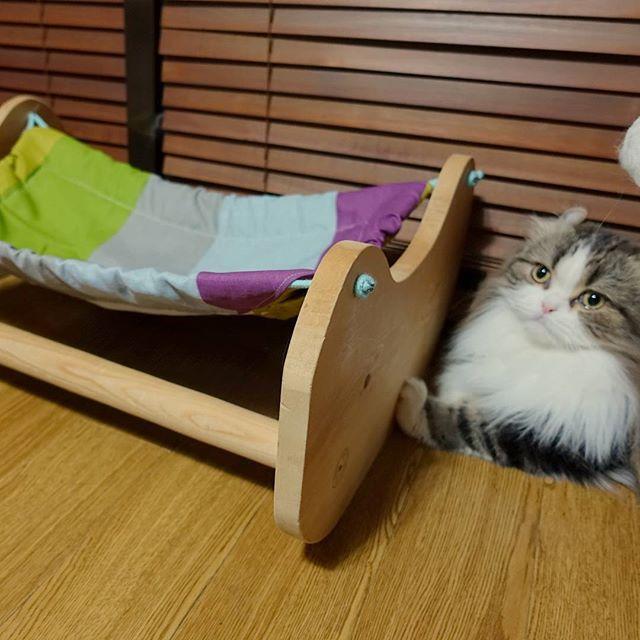 乗ってええんやで.. #ハンモック#ねこ部#relax#petstagram #catsagram #cat