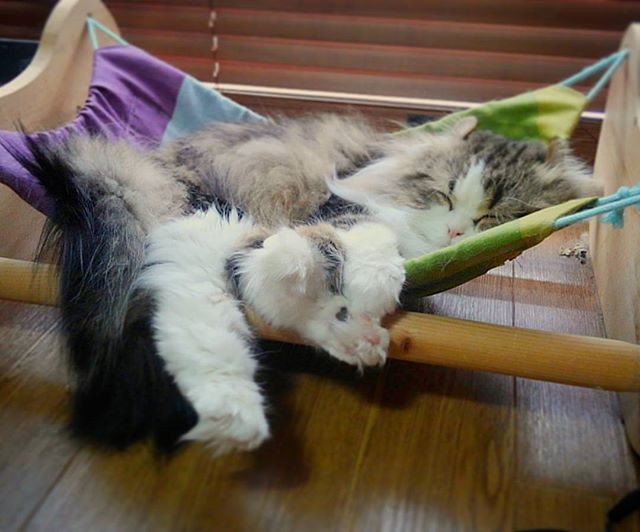 最高にうらやましい。#catoftheday #hammock