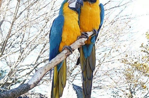 鳥#alfredhitchcock #hitchcock#thebirds#酉年