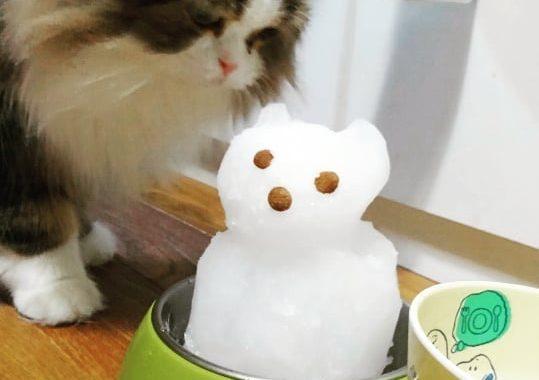カリカリつき雪だるまを提案したのですが不評でした。
