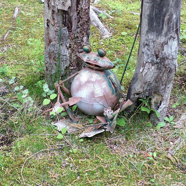 退廃的蛙.