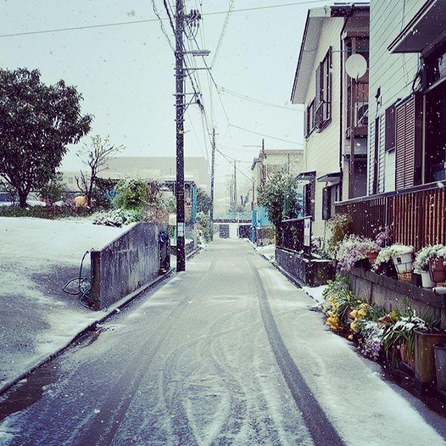 本当に大雪になるとは…引きこもりたい。。