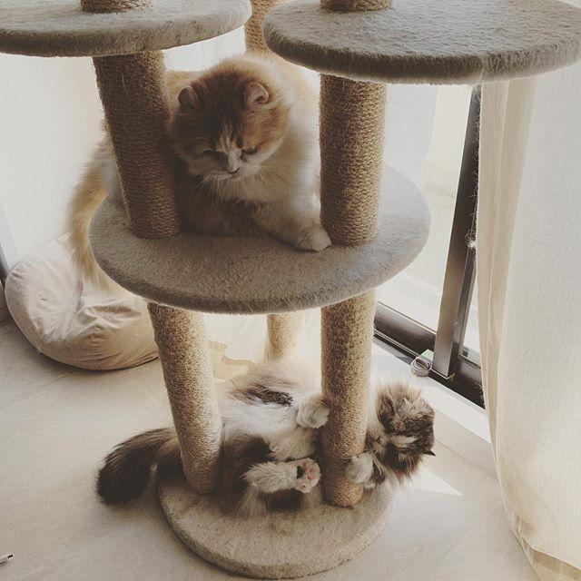 タワー倒壊を目論む猫..