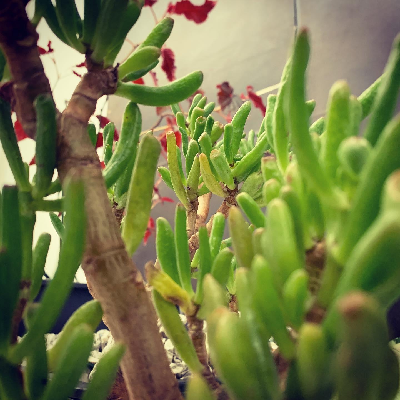 虫の目線#green