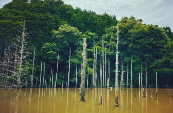 #坊主 #fishing ⠀#bassfishing⠀#topwater⠀#バス釣り