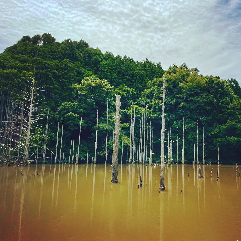 本日の釣果はという惨状につき、景色のみお送りしております。#坊主 #fishing ⠀#bassfishing⠀#topwater⠀#バス釣り